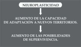 Grafico de Neuroplasticidad