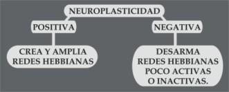 Grafico de Neuroplasticidad 2
