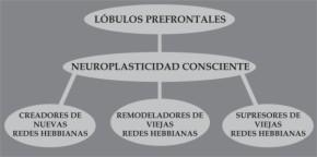 Lobulos